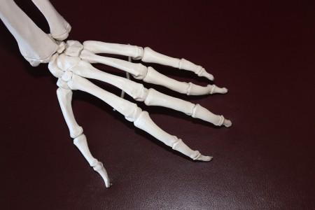 腓骨神経麻痺とは|解剖・原因・症状・治療・予防まですべて解説!