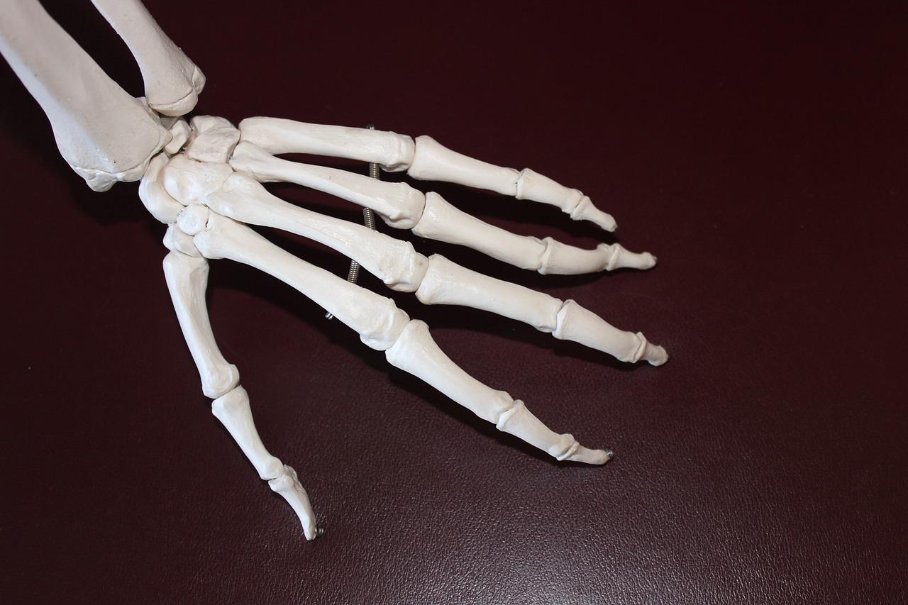 骨 手 解剖