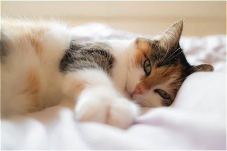 睡眠④ 猫