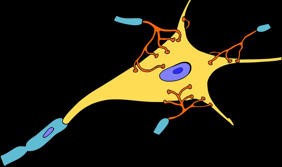 絞扼性神経障害とは|病態・治療・検査までわかりやすく解説