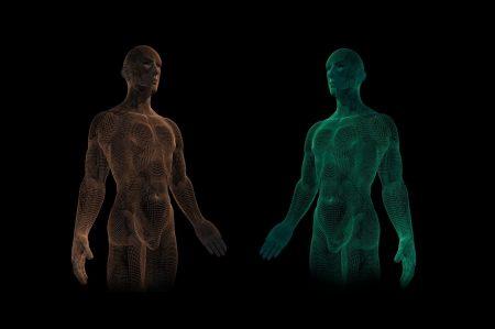 縫工筋の解剖学的知識まとめ|起始・停止から作用、神経支配まで全て解説!