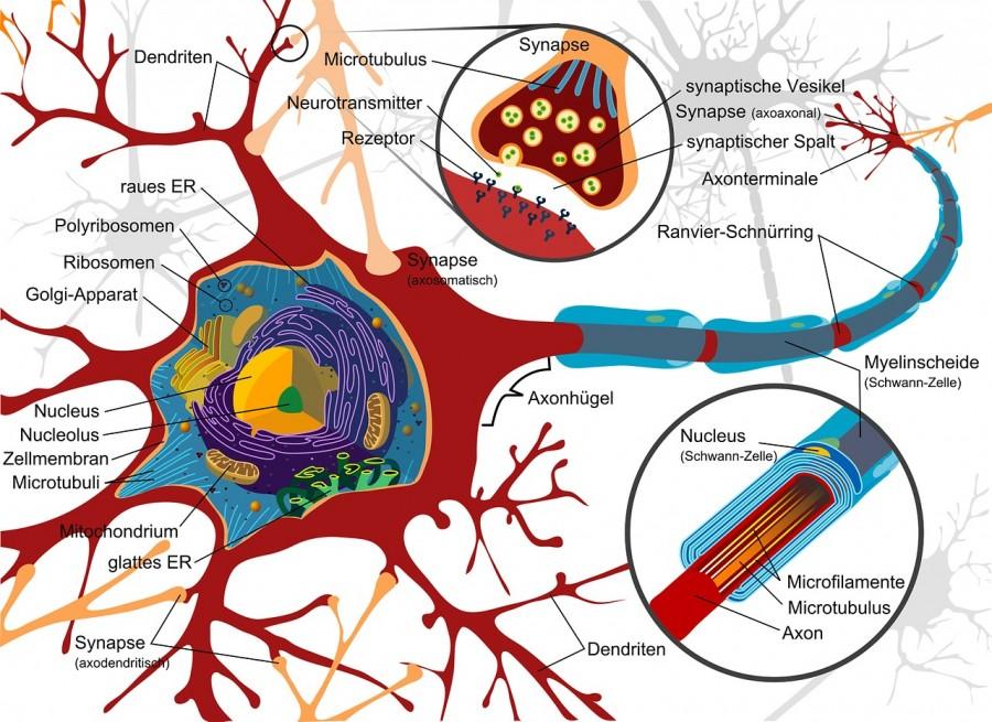 体幹・下肢に起こる末梢神経障害|代表的な絞扼性神経障害を紹介!