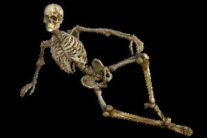 カダバートレーニング(cadaver training)とは?参加する方法は?